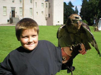 The Sorcerers Apprentice with falcon